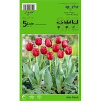 Plantistanbul Arie Hoek Lale Soğanı Paketli