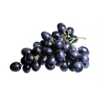 Plantistanbul Asma Üzüm Fidanı Black Seedless Tüplü