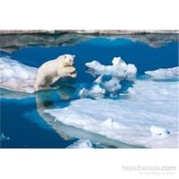 Clementoni N.Geographıc Polar Bear - 1000 Parça Puzzle