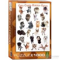Eurographics Kedi Irkları 1000 Parça Puzzle