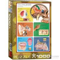Eurographics Beş Duyu 1000 Parçalık Puzzle