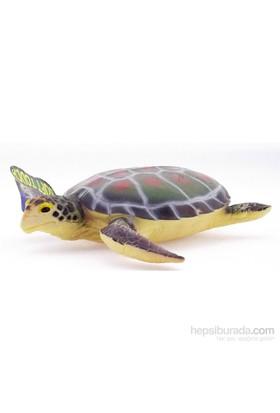 Kutup Hayvanlari Kaplumbağa