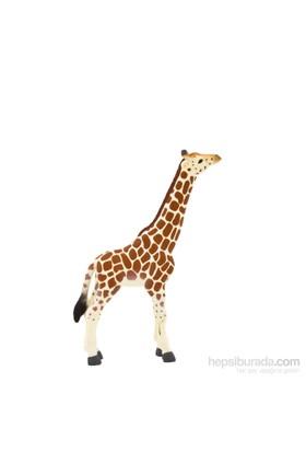 Animal Planet Zürafa Yavrusu Model Figür