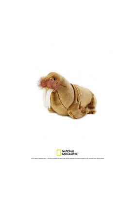 National Geographic Walrus