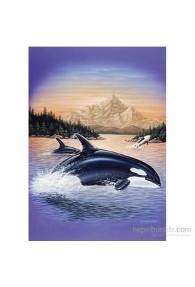 Orcas (1500 Parça Puzzle)