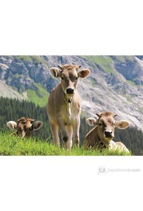 Cows On The Patrol (500 parça)