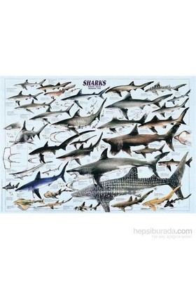 Shark (1000 Parça)