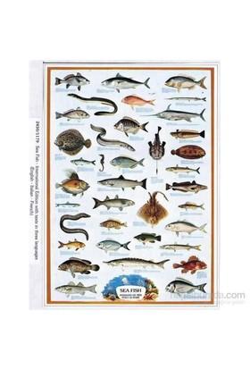Sea Fish (1000 Parça)