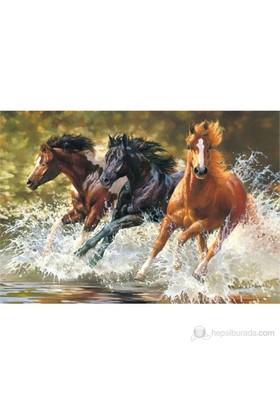 Castorland Splash 500 Parçalık Puzzle Atlar