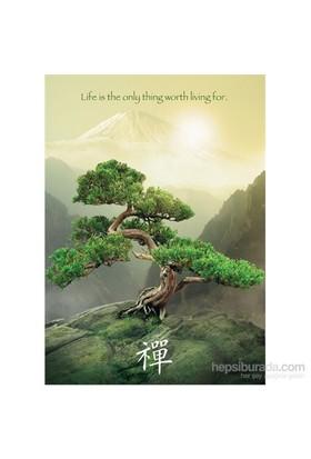 Ravensburger 1000 Parça Puzzle Zen Ağacı
