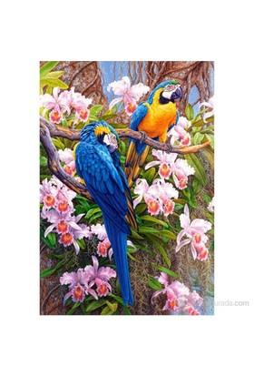 Castorland 1500 Parça Puzzle Orkideler Ve Papağanlar