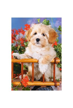 Castorland Puzzle Puppy in Cart (60 Parça)