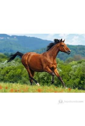 Castorland 1000 Parça Puzzle Reddish-Brown Horse