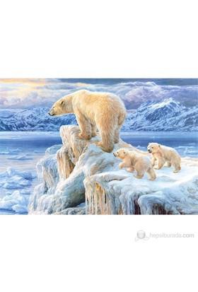 Castorland 1000 Parça Arctic Kingdom Puzzle