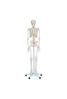 Anatomia İnsan İskeleti Modeli 180 Cm