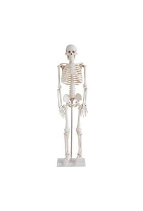 Anatomia İnsan İskeleti Modeli 85 Cm