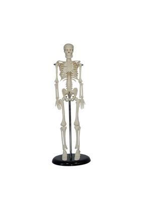 Anatomia İnsan İskeleti Modeli 45 Cm