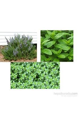 Plantistanbul Tıbbi Aromatik Bitki Paketi, Biberiye, Nane, Kekik