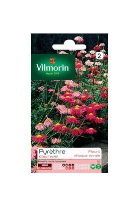 Vilmorin Saray Patı Çiçek Tohumu