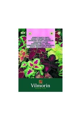 Vilmorin Karışık Unwin Melez Yıldız Çiçeği Çiçek Tohumu