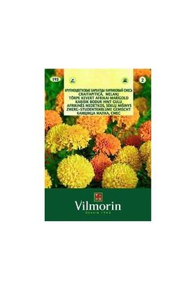 Vilmorin Kadife Çiçeği Karışık Renkli Çiçek Tohumu
