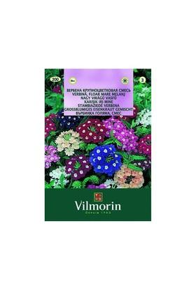 Vilmorin Yer Minesi Çiçeği Çiçek Tohumu