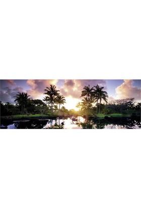 Heye Palm Trees - Humboldt (2000 Parça - Panorama)