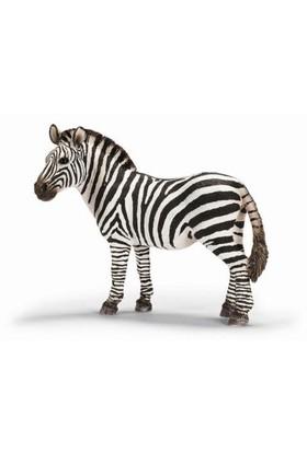 Schleich Zebra Dişi Figür Model
