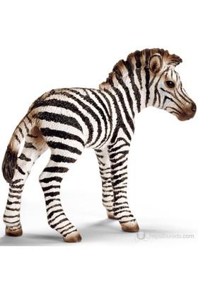 Schleich Yavru Zebra