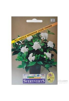Sveryverts Mis Kokulu Gardenya Çiçeği Tohumu
