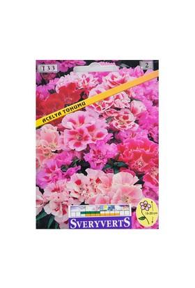 Açelya Çiçeği Tohumu