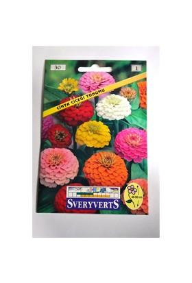 Cinya Çiçeği Tohumu