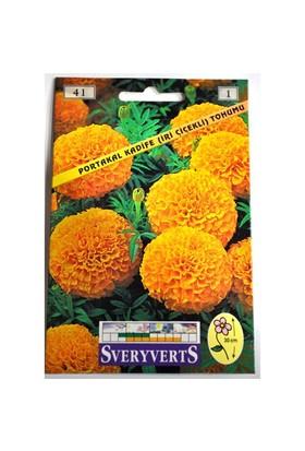 Portakal Kadife İri Çiçekli Tohumu