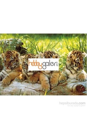 Ks Games Four Tigers,Mark Goulding (200 Parça Puzzle)