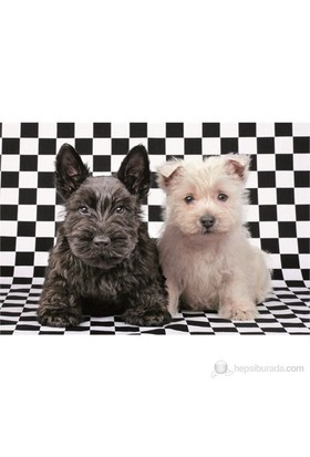 Educa 500 Parça Puzzle Checked Terriers