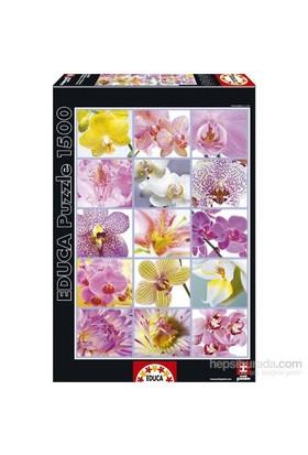 Educa 1500 Parça Çiçek Kolaj Puzzle