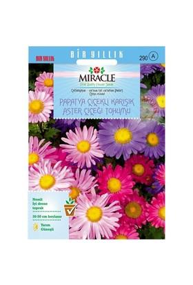 Miracle Tohum Papatya Çiçekli Karışık Renkli Chinensis Aster Çiçeği Tohumu (360 Tohum)