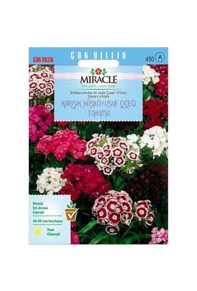 Miracle Tohum Uzun Boylu Karışık Renkli Hüsnü Yusuf Çiçeği Tohumu (690 Tohum)