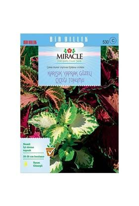 Miracle Tohum Karışık Renkli Kolyos (Coleus) Yaprak Güzeli Çiçeği Tohumu(700 Tohum)