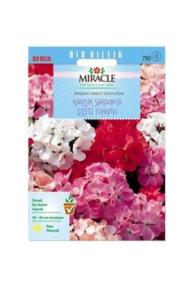 Miracle Tohum Colorama Karışık Renkli Hibrit Sardunya Çiçeği Tohumu (24 Tohum)