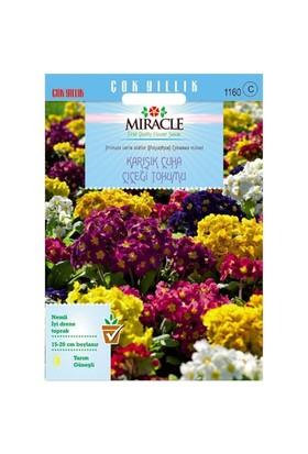 Miracle Tohum Karışık Renkli Onbir Ay Çuha Çiçeği Tohumu (50 Tohum)