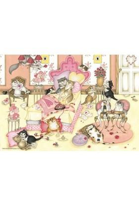 Anatolian Sevgililer Günü / Valentene's Day Cats