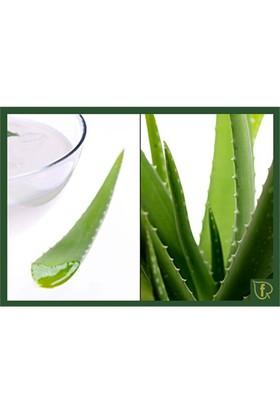 Plantistanbul Aloe Vera Bitkisi