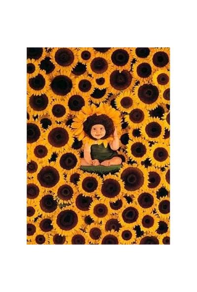 Schmidt Puzzle Sonnenblumen (1000 Parça)