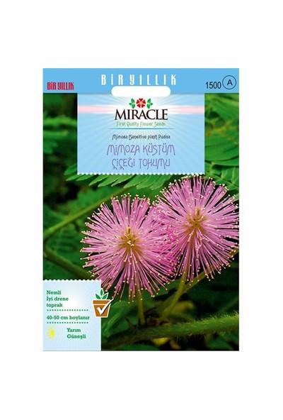 Miracle Tohum Mimoza Küstüm Çiçeği Tohumu(140 Tohum)