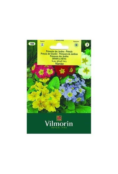 Vilmorin Çuha Çiçeği Çiçek Tohumu