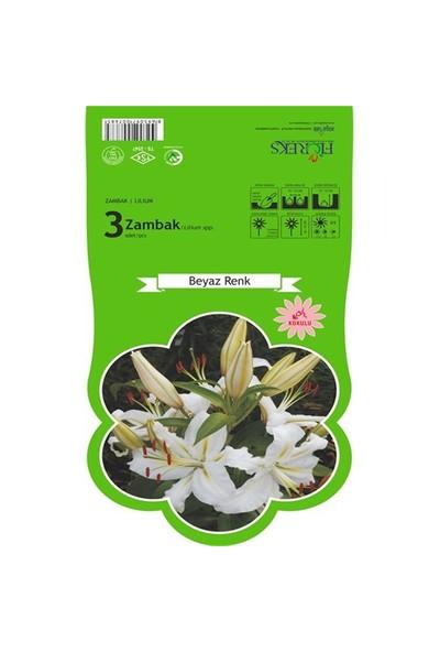 Plantistanbul Beyaz Zambak Soğanı