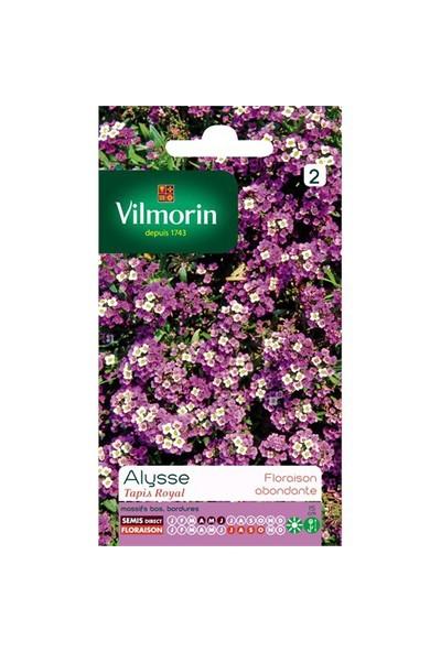 Vilmorin Alisyum (Kraliyet Halısı) Çiçek Tohumu
