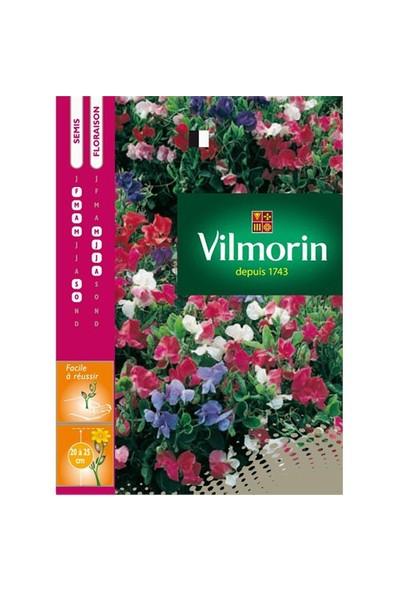 Vilmorin Nazende Çiçeği - Itırşahi Çiçek Tohumu