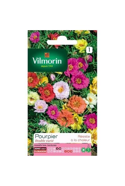 Vilmorin Katmerli ipek Çiçeği (Kedi Tırnağı) Çiçek Tohumu